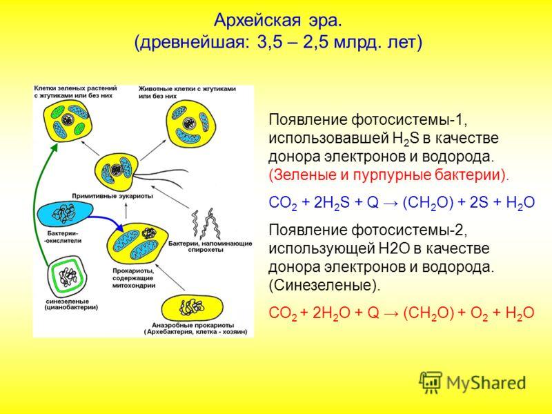 Появление фотосистемы-1, использовавшей Н 2 S в качестве донора электронов и водорода. (Зеленые и пурпурные бактерии). СО 2 + 2Н 2 S + Q (СН 2 О) + 2S + Н 2 О Появление фотосистемы-2, использующей Н2О в качестве донора электронов и водорода. (Синезел