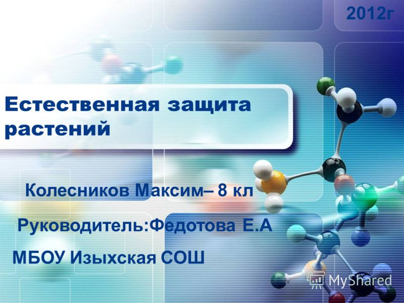 Естественная защита растений Руководитель:Федотова Е.А МБОУ Изыхская СОШ Колесников Максим– 8 кл 2012г