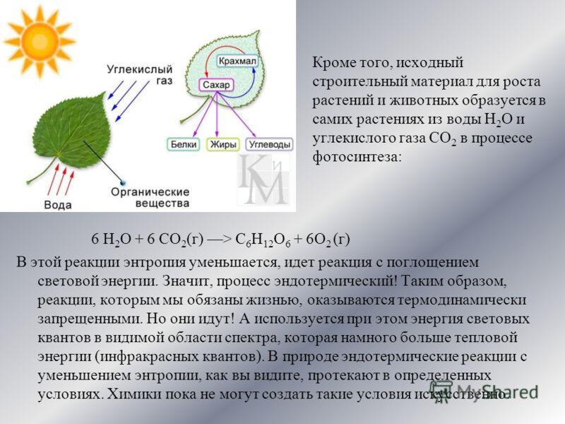 Кроме того, исходный строительный материал для роста растений и животных образуется в самих растениях из воды Н 2 О и углекислого газа СО 2 в процессе фотосинтеза: 6 Н 2 О + 6 СО 2 (г) > С 6 Н 12 О 6 + 6О 2 (г) В этой реакции энтропия уменьшается, ид