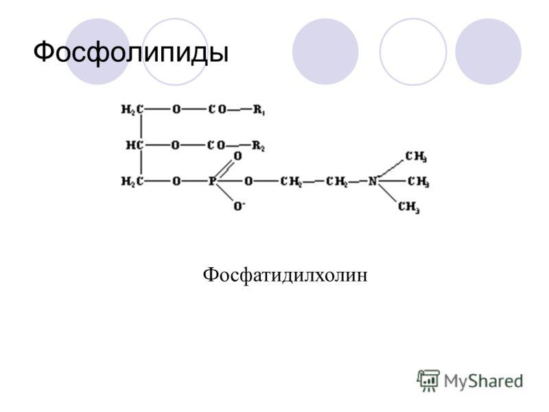Фосфолипиды Фосфатидилхолин