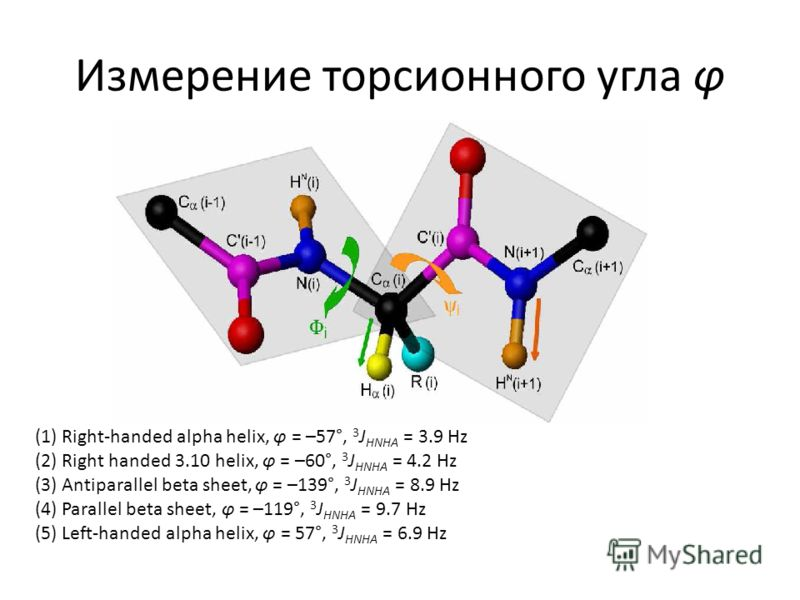 Измерение торсионного угла φ (1) Right-handed alpha helix, φ = –57°, 3 J HNHA = 3.9 Hz (2) Right handed 3.10 helix, φ = –60°, 3 J HNHA = 4.2 Hz (3) Antiparallel beta sheet, φ = –139°, 3 J HNHA = 8.9 Hz (4) Parallel beta sheet, φ = –119°, 3 J HNHA = 9