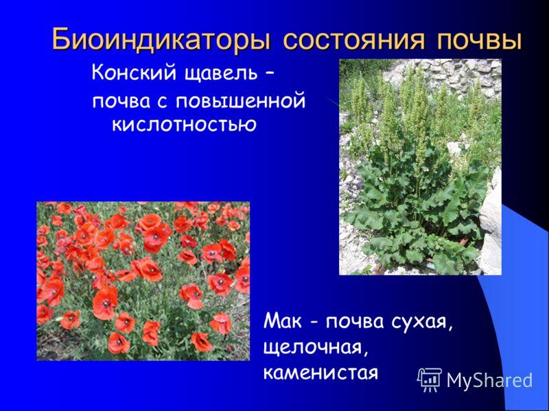Биоиндикаторы состояния почвы Конский щавель – почва с повышенной кислотностью Мак - почва сухая, щелочная, каменистая