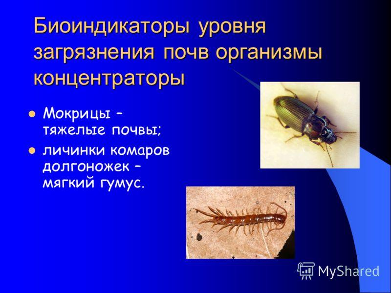 Биоиндикаторы уровня загрязнения почв организмы концентраторы Мокрицы – тяжелые почвы; личинки комаров долгоножек – мягкий гумус.