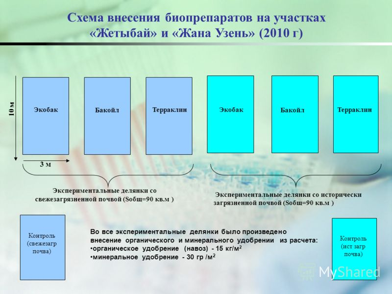 3 м 10 м Бакойл Экобак Терраклин Бакойл Экобак Терраклин Во все экспериментальные делянки было произведено внесение органического и минерального удобрении из расчета: органическое удобрение (навоз) - 15 кг/м 2 минеральное удобрение - 30 гр /м 2 Экспе