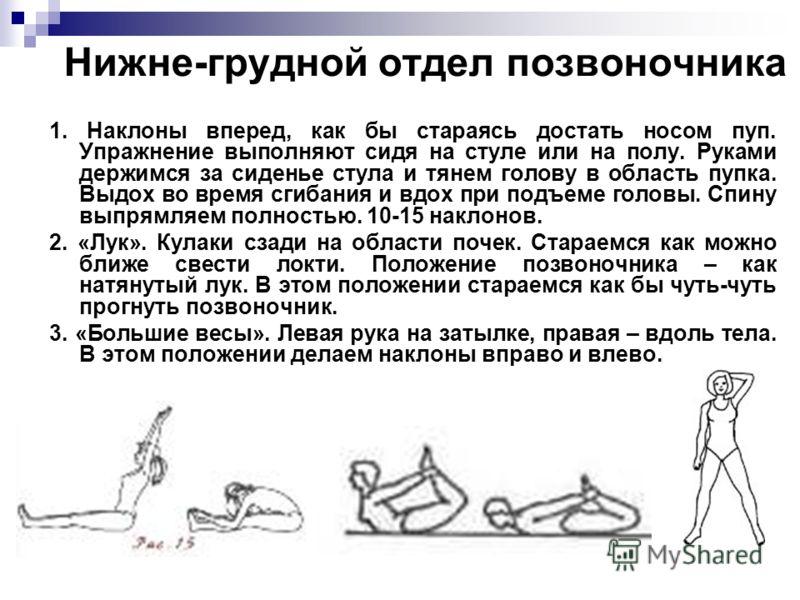 Нижне-грудной отдел позвоночника 1. Наклоны вперед, как бы стараясь достать носом пуп. Упражнение выполняют сидя на стуле или на полу. Руками держимся за сиденье стула и тянем голову в область пупка. Выдох во время сгибания и вдох при подъеме головы.