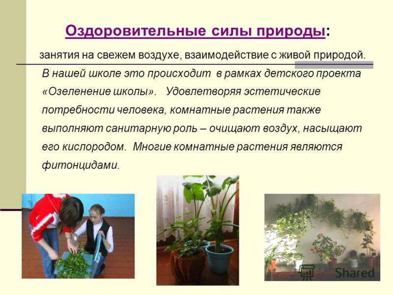 Оздоровительные силы природы: занятия на свежем воздухе, взаимодействие с живой природой. В нашей школе это происходит в рамках детского проекта «Озеленение школы». Удовлетворяя эстетические потребности человека, комнатные растения также выполняют са