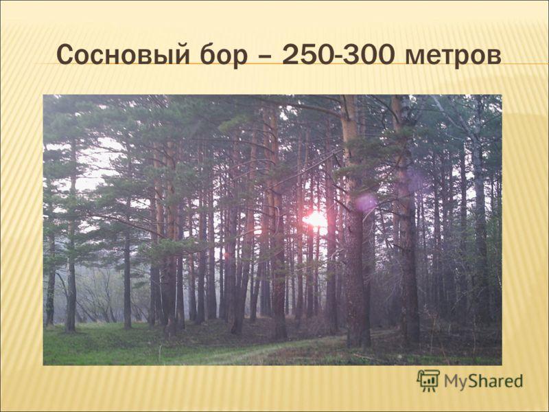 Сосновый бор – 250-300 метров