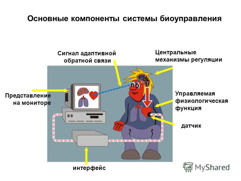 Основные компоненты системы биоуправления Центральные механизмы регуляции Управляемая физиологическая функция датчик интерфейс Представление на мониторе Сигнал адаптивной обратной связи