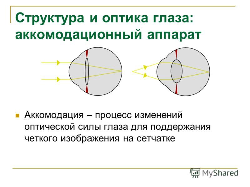 Структура и оптика глаза: аккомодационный аппарат Аккомодация – процесс изменений оптической силы глаза для поддержания четкого изображения на сетчатке