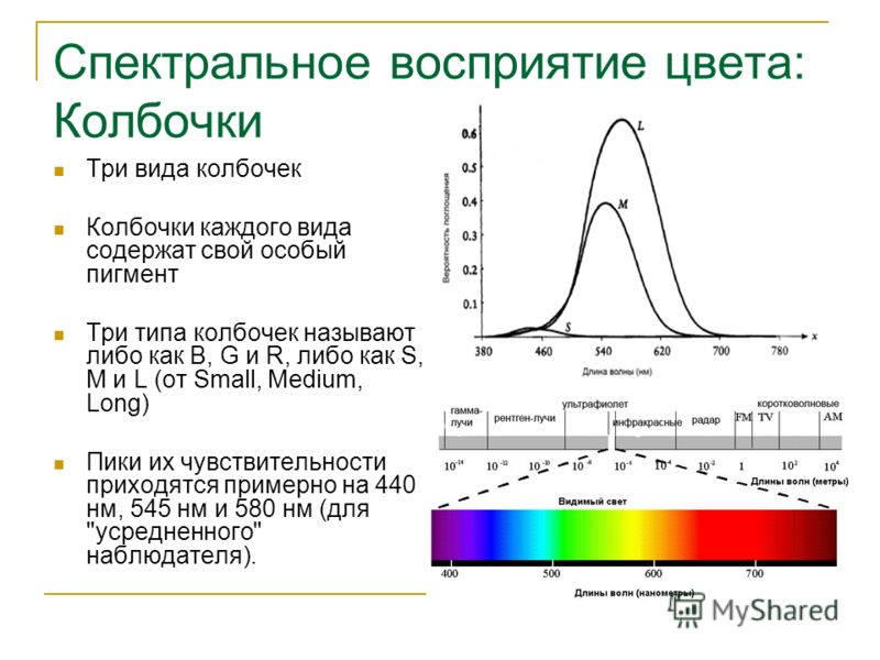 Спектральное восприятие цвета: Колбочки Три вида колбочек Колбочки каждого вида содержат свой особый пигмент Три типа колбочек называют либо как B, G и R, либо как S, M и L (от Small, Medium, Long) Пики их чувствительности приходятся примерно на 440