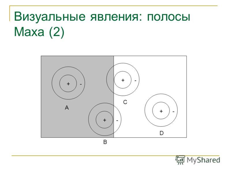 Визуальные явления: полосы Маха (2) +-+-+-+- A B C D