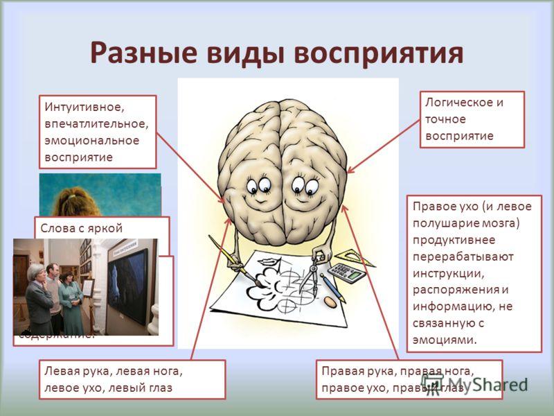 Разные виды восприятия Интуитивное, впечатлительное, эмоциональное восприятие Логическое и точное восприятие Женщины в основном держат младенцев на левой руке – даже независимо от того, левши они или правши. Слова с яркой эмоциональной окраской также