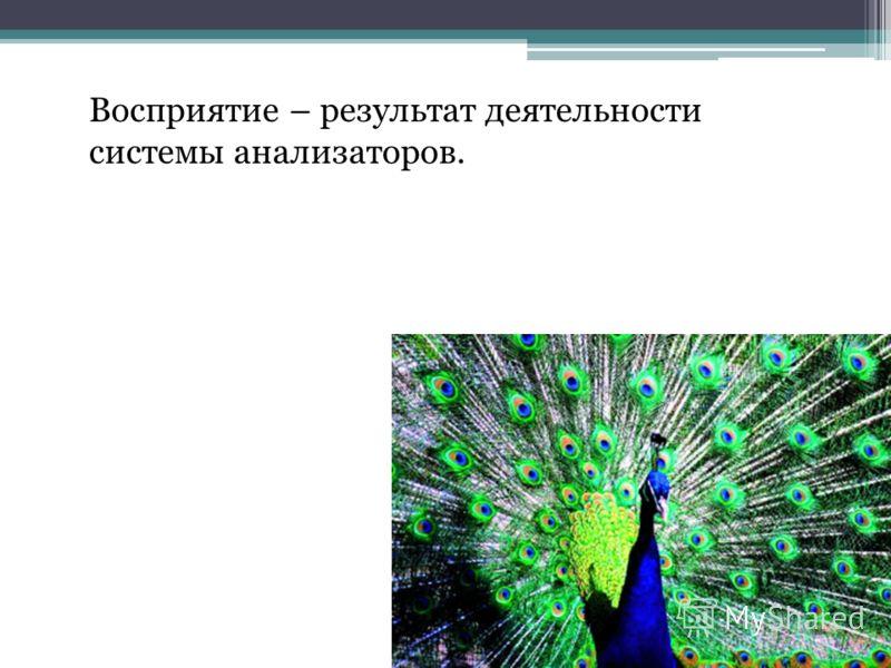 Восприятие – результат деятельности системы анализаторов.