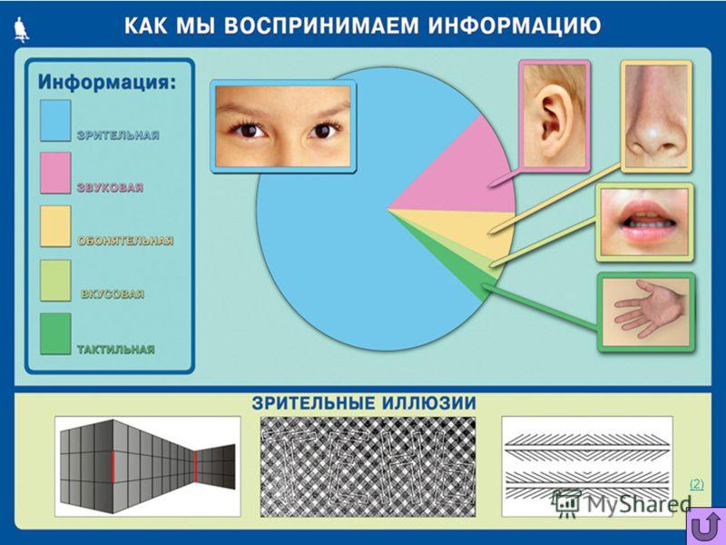 Восприятие информации Человек воспринимает информацию из внешнего мира при помощи всех своих органов чувств, которые являются информационными каналами, связывающими человека с внешним миром. (1) (1) Слух Обоняние Зрение Осязание Вкус (3)