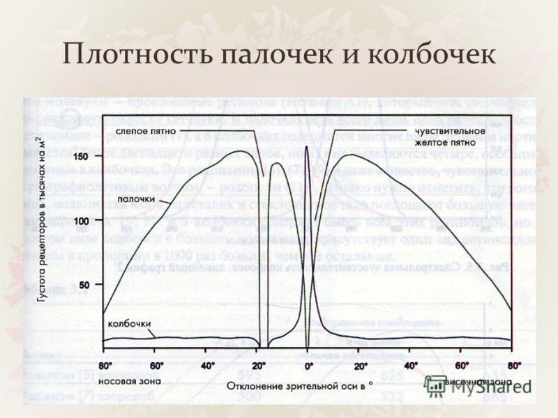 Плотность палочек и колбочек