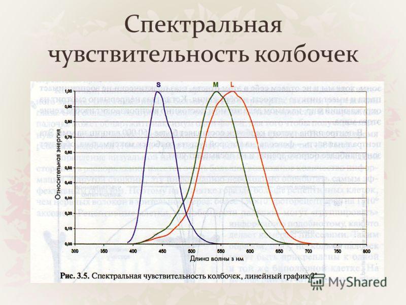 Спектральная чувствительность колбочек