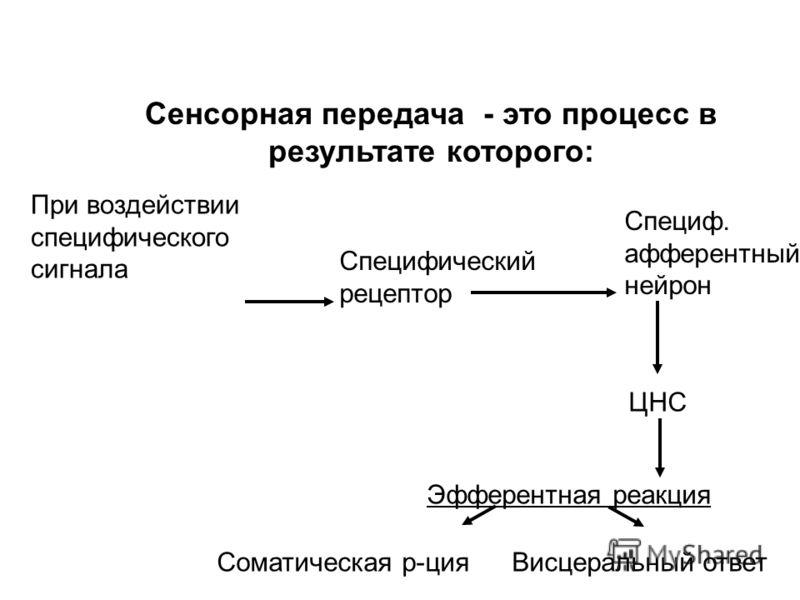 Локализация рецепторов Клеточная мембрана или цитоплазматические белки рецепторы Специализированные клетки или структуры трансформирующие различные стимулы в биологический сигнал Центральные рецепторы Периферические рецепторы