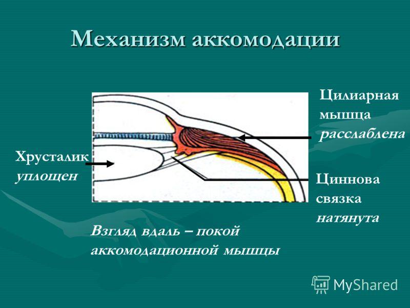 Механизм аккомодации Хрусталик уплощен Цилиарная мышца расслаблена Циннова связка натянута Взгляд вдаль – покой аккомодационной мышцы