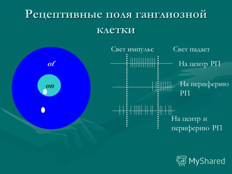 Рецептивные поля ганглиозной клетки on of Свет импульсСвет падает На центр РП На периферию РП На центр и периферию РП
