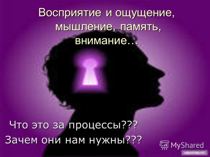 Восприятие и ощущение, мышление, память, внимание… Что это за процессы??? Зачем они нам нужны???