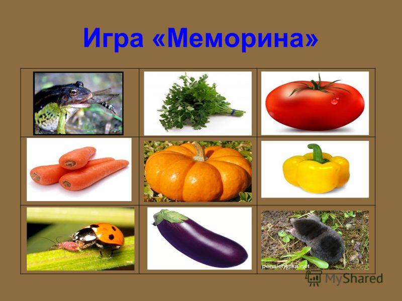 Задание «Раскрась только овощи»
