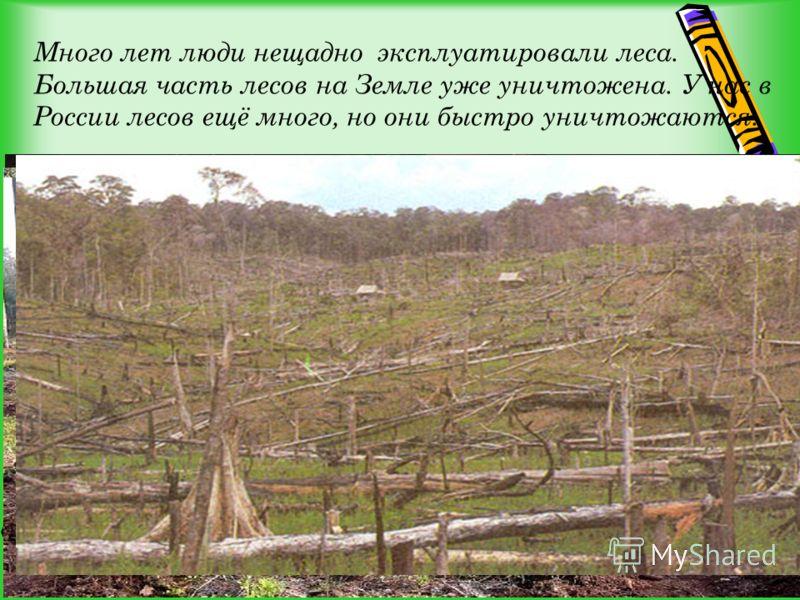 Много лет люди нещадно эксплуатировали леса. Большая часть лесов на Земле уже уничтожена. У нас в России лесов ещё много, но они быстро уничтожаются.