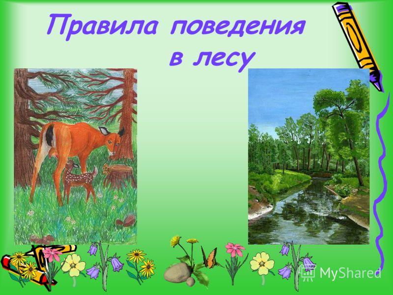 Лесные Цветы Презентация