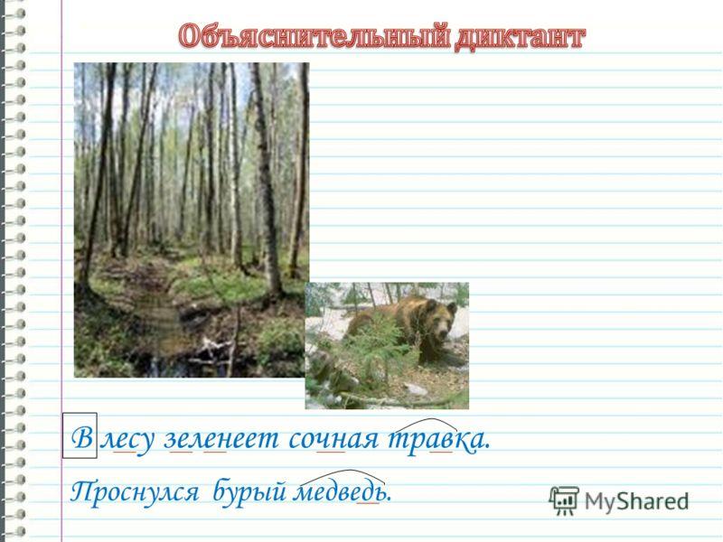 В лесу зеленеет сочная травка. Проснулся бурый медведь.