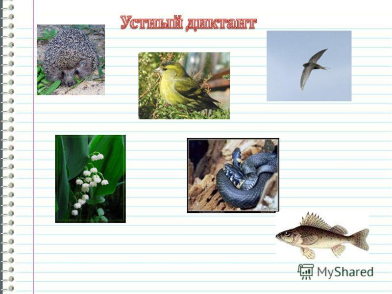 разработка урока русского языка мой знакомый