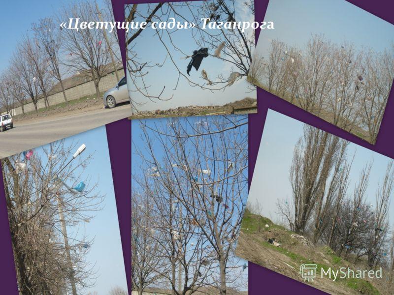 «Цветущие сады» Таганрога