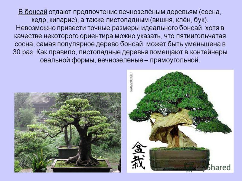 В бонсай отдают предпочтение вечнозелёным деревьям (сосна, кедр, кипарис), а также листопадным (вишня, клён, бук). Невозможно привести точные размеры идеального бонсай, хотя в качестве некоторого ориентира можно указать, что пятиигольчатая сосна, сам
