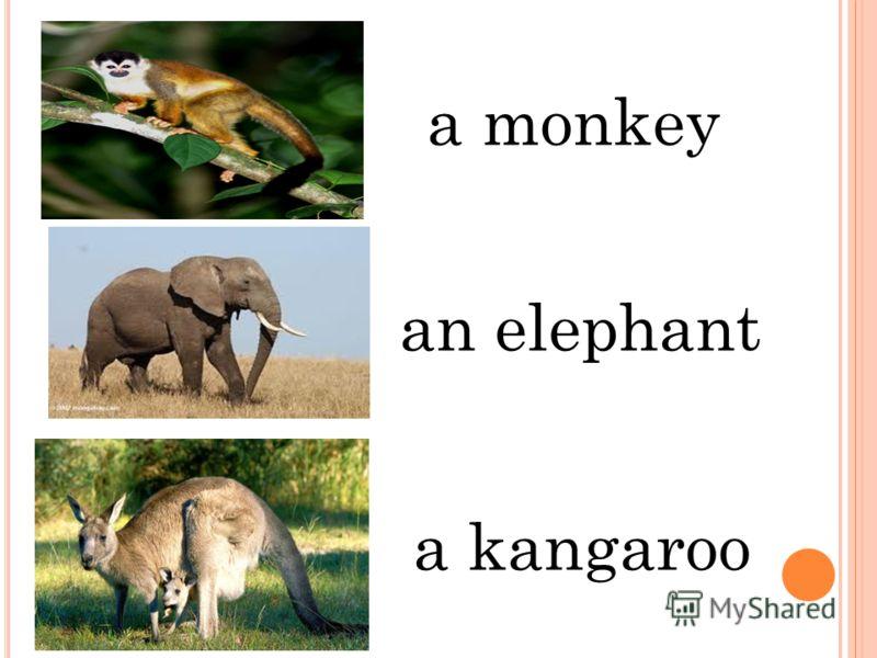 an elephant a monkey a kangaroo