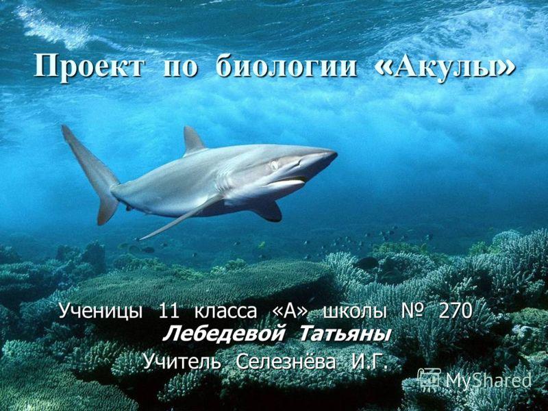 Проект по биологии « Акулы » Ученицы 11 класса «А» школы 270 Лебедевой Татьяны Учитель Селезнёва И.Г.