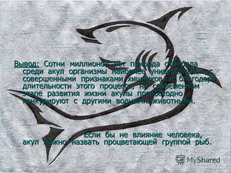 Вывод: Сотни миллионов лет природа отбирала среди акул организмы наиболее универсальные, с совершенными признаками хищников, и благодаря длительности этого процесса, на современном этапе развития жизни акулы превосходно конкурируют с другими водными