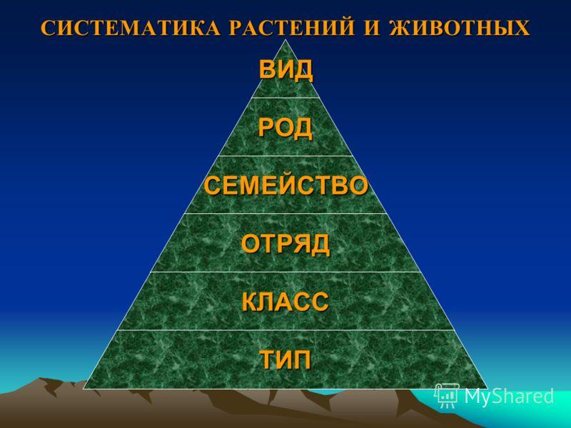 Иерархия уровней организации живой