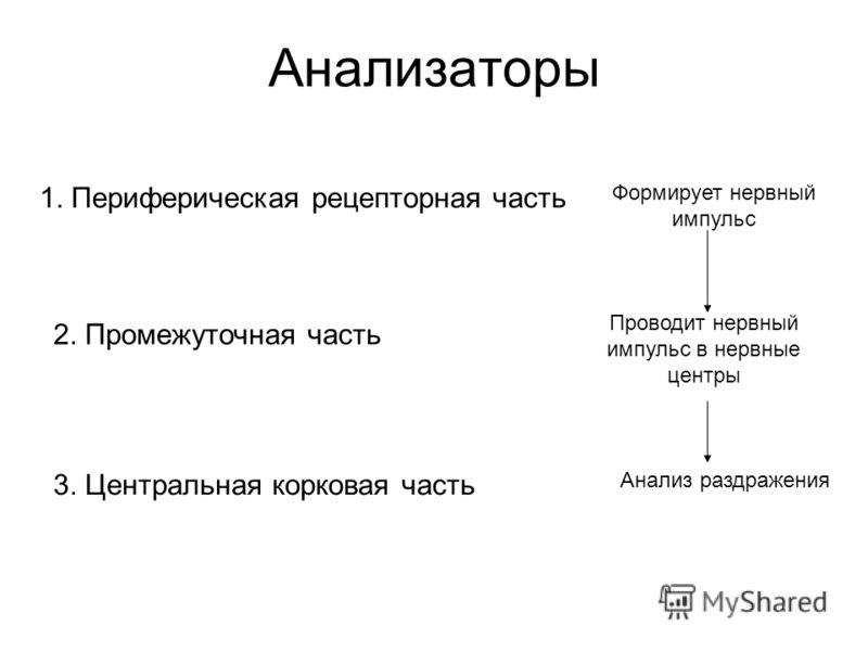 Анализаторы 1. Периферическая рецепторная часть Формирует нервный импульс 2. Промежуточная часть Проводит нервный импульс в нервные центры 3. Центральная корковая часть Анализ раздражения