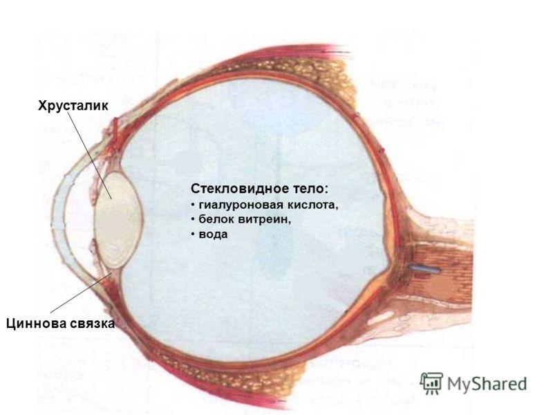 Тело Стекловидное фото