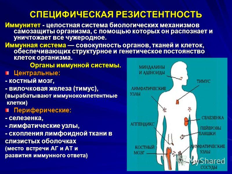 СПЕЦИФИЧЕСКАЯ РЕЗИСТЕНТНОСТЬ Иммунитет - целостная система биологических механизмов самозащиты организма, с помощью которых он распознает и уничтожает все чужеродное. Иммунная система совокупность органов, тканей и клеток, обеспечивающих структурное