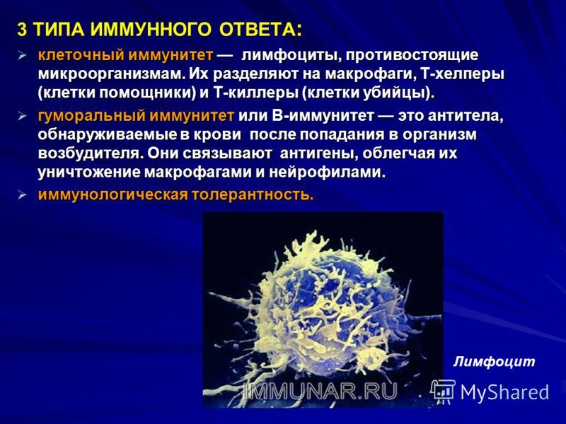 3 ТИПА ИММУННОГО ОТВЕТА : клеточный иммунитет лимфоциты, противостоящие микроорганизмам. Их разделяют на макрофаги, Т-хелперы (клетки помощники) и Т-киллеры (клетки убийцы). клеточный иммунитет лимфоциты, противостоящие микроорганизмам. Их разделяют