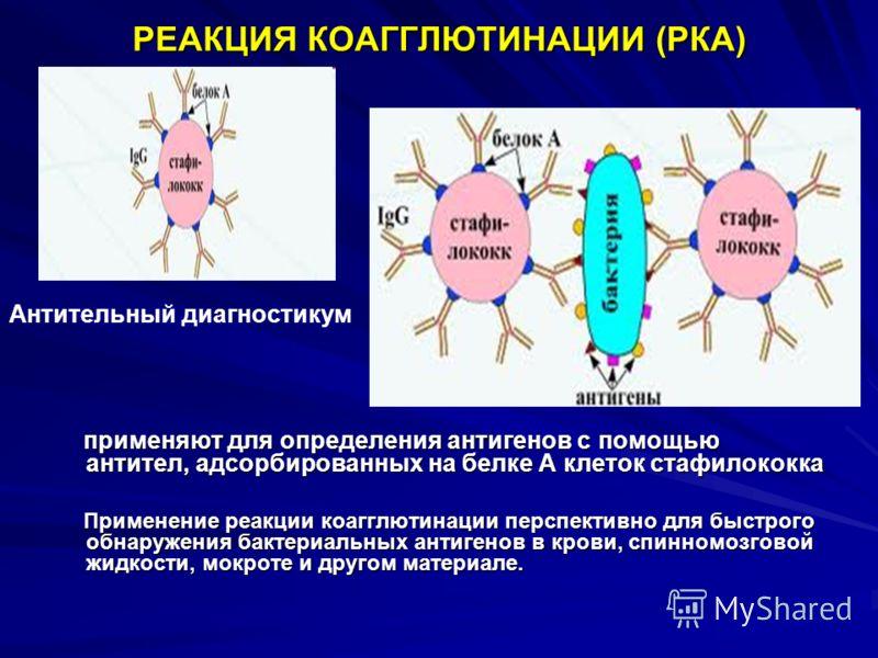 РЕАКЦИЯ КОАГГЛЮТИНАЦИИ (РКА) применяют для определения антигенов с помощью антител, адсорбированных на белке А клеток стафилококка применяют для определения антигенов с помощью антител, адсорбированных на белке А клеток стафилококка Применение реакци