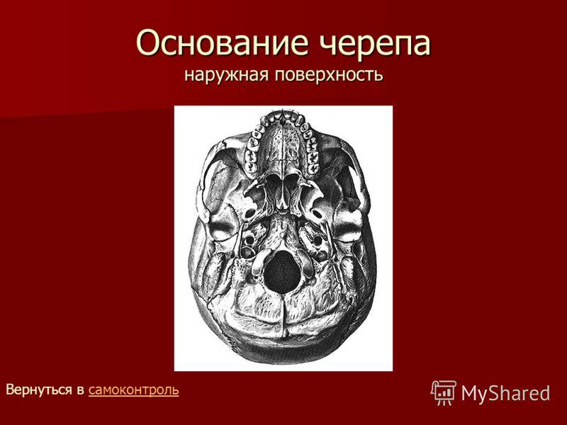 Основание черепа наружная поверхность Вернуться в самоконтрольсамоконтроль