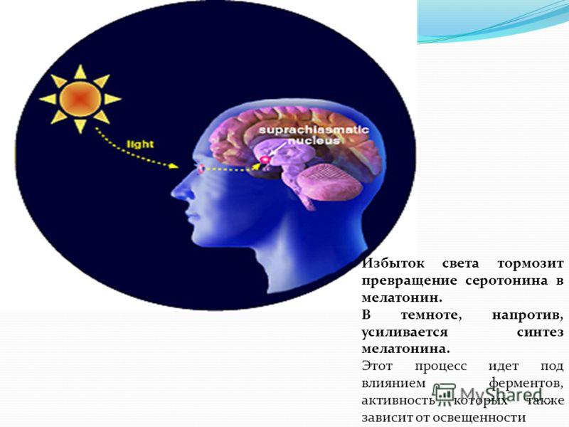 Избыток света тормозит превращение серотонина в мелатонин. В темноте, напротив, усиливается синтез мелатонина. Этот процесс идет под влиянием ферментов, активность которых также зависит от освещенности