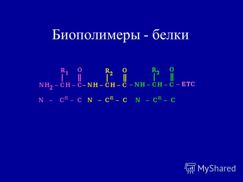Биополимеры - белки