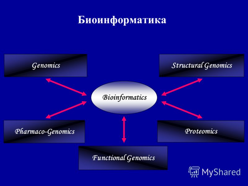 Биоинформатика Structural Genomics Pharmaco-Genomics Functional Genomics Proteomics Genomics Bioinformatics