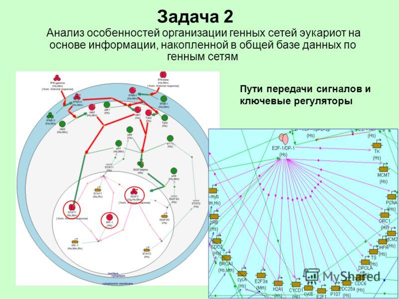 Задача 2 Анализ особенностей организации генных сетей эукариот на основе информации, накопленной в общей базе данных по генным сетям Пути передачи сигналов и ключевые регуляторы