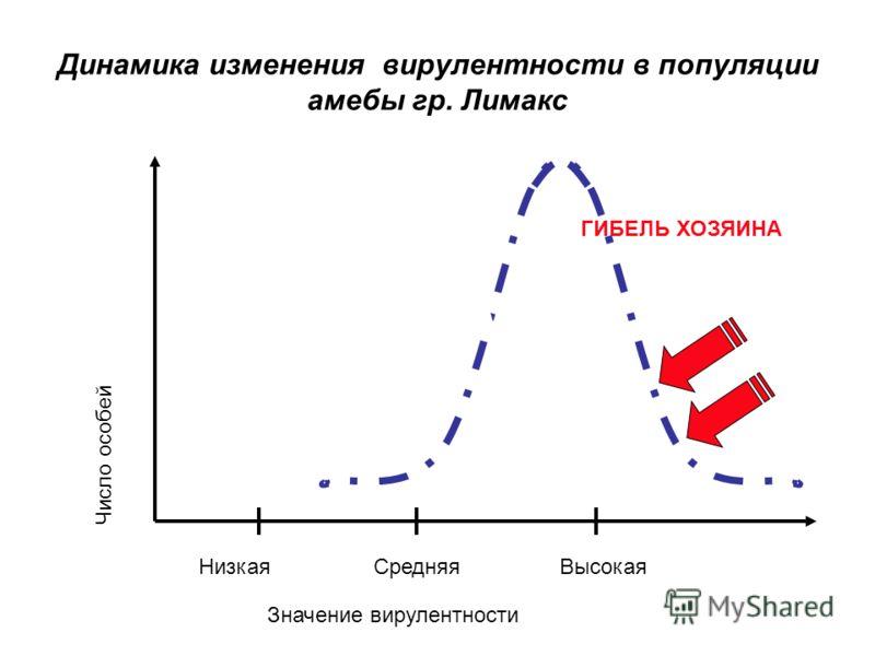 Динамика изменения вирулентности в популяции амебы гр. Лимакс ГИБЕЛЬ ХОЗЯИНА Значение вирулентности Число особей Низкая Средняя Высокая