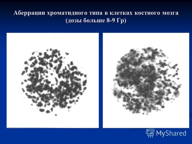 Аберрации хроматидного типа в клетках костного мозга (дозы больше 8-9 Гр)