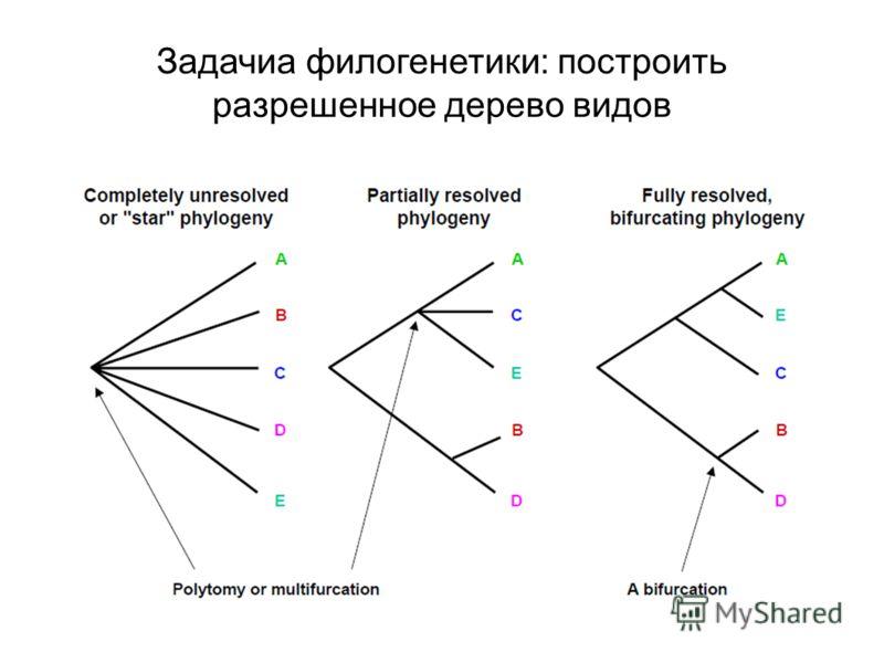 Задачиа филогенетики: построить разрешенное дерево видов
