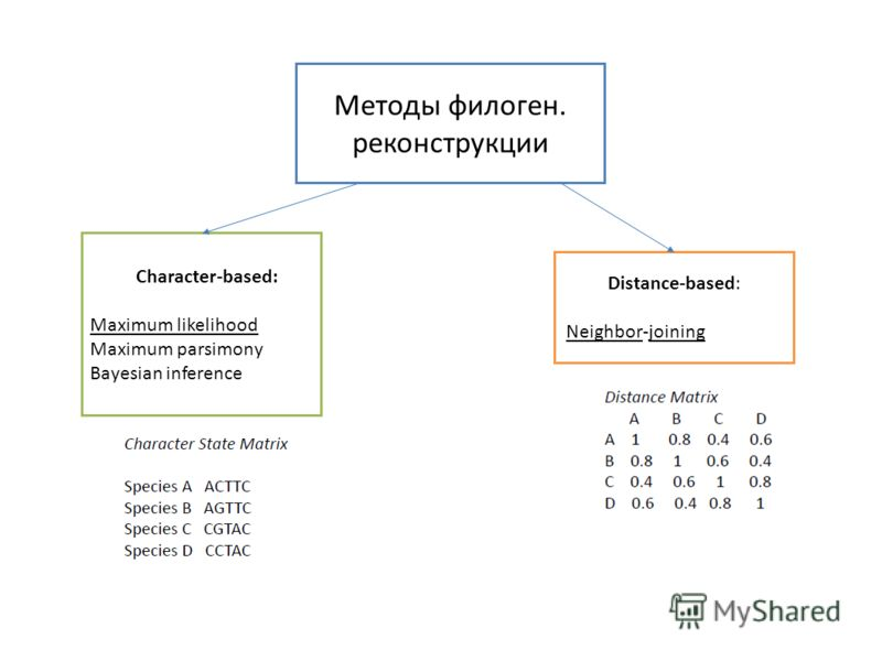 Методы филоген. реконструкции Character-based: Maximum likelihood Maximum parsimony Bayesian inference Distance-based: Neighbor-joining