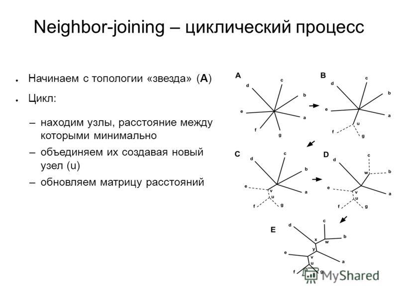 Neighbor-joining – циклический процесс Начинаем с топологии «звезда» (A) Цикл: –находим узлы, расстояние между которыми минимально –объединяем их создавая новый узел (u) –обновляем матрицу расстояний